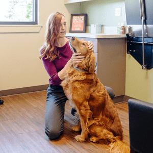 Preventative Care For Dogs